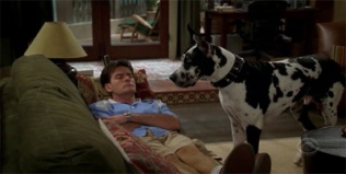 Two and a Half Men 04x04 : A Pot Smoking Monkey- Seriesaddict